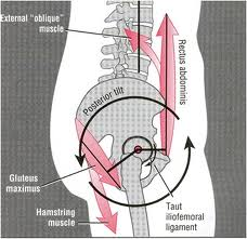 images 3 posterior pelvic tilt