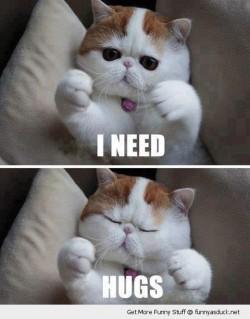 funny cat cute need hugs pics 250x319 funny cat cute need hugs pics